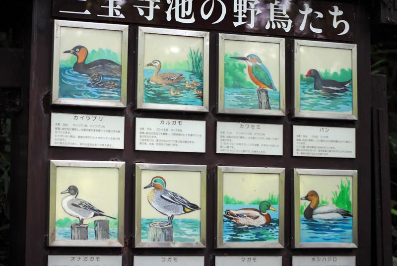 野鳥の看板